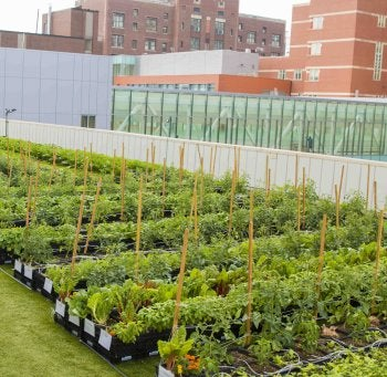 The Rooftop Farm, Located Three Stories High, Can Be Seen From The Upper  Floors Of BMCu0027s Shapiro Ambulatory Care Center. U201c