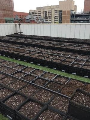 Healthy Food Grown High Above the Hub: New Rooftop Farm Helps BMC Go Even Greener