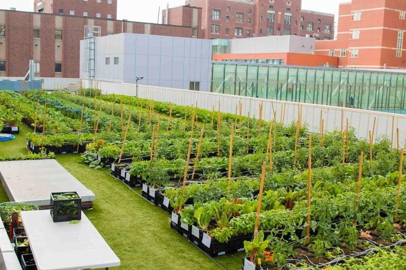 BMC Rooftop Farm