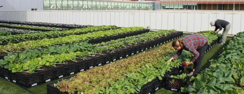 First Hospital-Based Rooftop Farm in Massachusetts