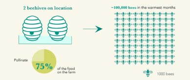 2 beehives on location pollinate 75% of the food on the farm. We have about 100,000 bees in the warmest months