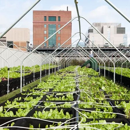 Not A Fan Of Hospital Food? Hospitals Are Working To Change That By Growing Their Own Produce