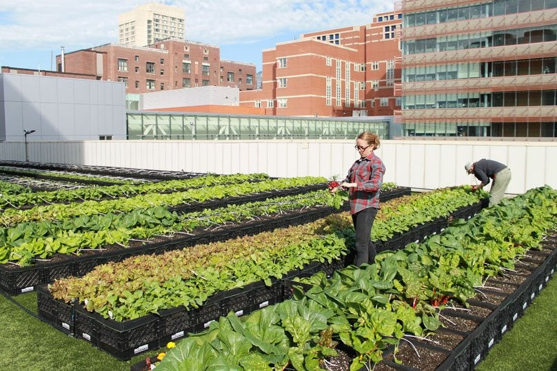 Employees working on the Rooftop Farm