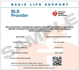 basic life support provider certificate