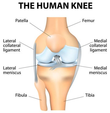 knee-diagram-orthopedic-surgery