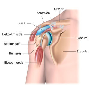 shoulder diagram orthopedic surgery