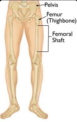 Femur Shaft