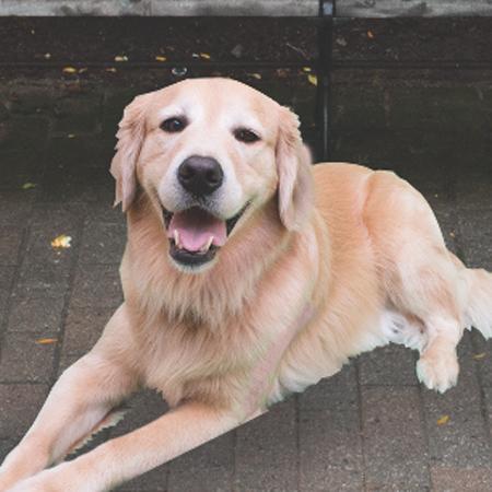 Healing Pups: Sarge